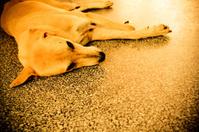 sleeping dog with monotone effect