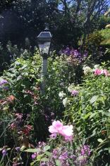 Nantucket Wild Flower Garden