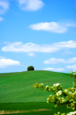 Alone on the hill amidst a sea of green