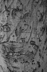 Tree Bark and carvings/graffiti
