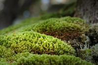 Closeup of Moss