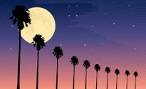 Palm moon