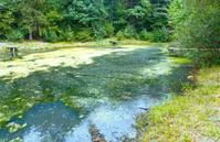 Dirty little lake.