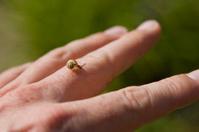 Little snail on mans finger