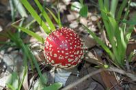 Red Mushroom Closeup