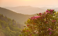 Sunrise mountains and flowers