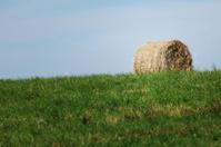 hay on field