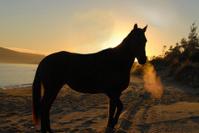 Horse-silhouette-beach-Australia