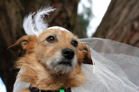Beautiful bride dog