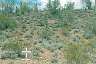 Cross on roadside represents traffic death in Arizona