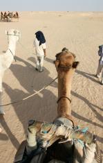 Beduins in Sahara