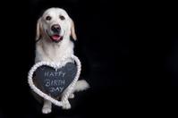 Golden Retriever wishes Happy Birthday