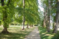 Embankment of River Cam, Cambridge