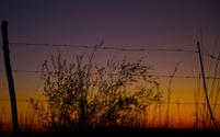 Sunrise in the veld