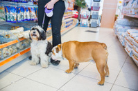 Cute Tibetan Terrier and English Bulldog in pet store..