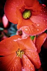 lomo processed flower