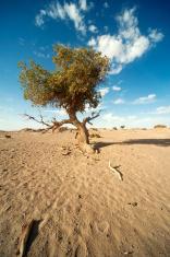 China's Inner Mongolia desert