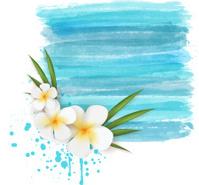 Plumeria on watercolor background