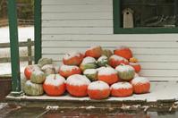 Snow-Covered Pumpkins