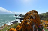 Lichen Rocks in Cornwall