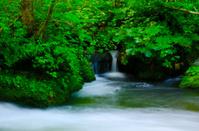 OIRASE-KEIRYU Stream