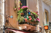 Italian flower stock photos - freeimages.com.