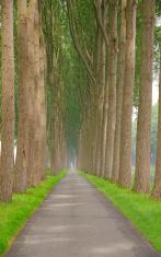 Treelined single lane parkway