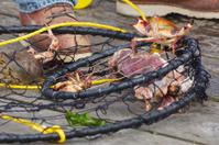 Dungeness crab Red Rock Crab Ring Trap pier Newport Oregon