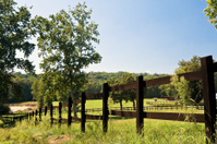 Paddock in a  Ranch. Color Image
