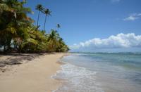 Tropical Beach 2