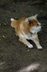 poor looking dog