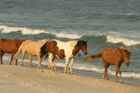 Wild Pony Train