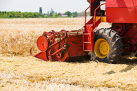 Combine harvester in action on barley field harvesting