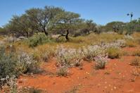 Bush Australien