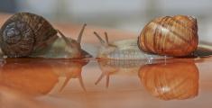 Snail talk