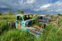 Junkyard Pickup Trucks in High Summer Grass