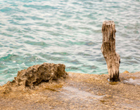 Wooden pole on the seaside