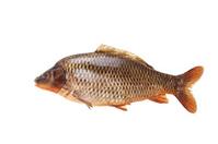 Large specimen of raw common carp