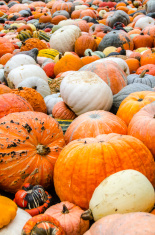 Plethora of Multi-colored Gourds