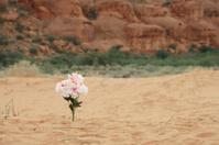 Flowers Growing in the Desert