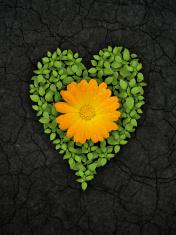 Green heart on cracked soil