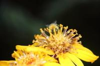 Bumblebee. Flower.