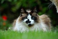 cats outdoor