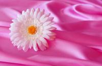 Flower, silk, texture, background.
