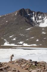 Mount Evans mountain goat and Summit Lake Colorado