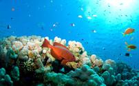 underwater life - Unterwasser Welt