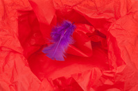 Red Wrinkled Wrapping Paper and Feather