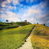 Daylily flower at sixty stone mountain