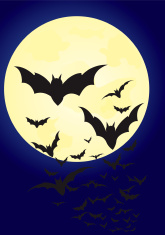 Bat on the moonlight