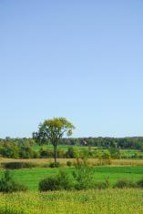 Countryside field landscape
